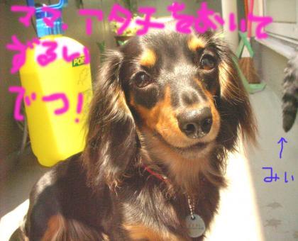 zurui_convert_20080615150556.jpg