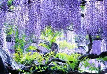 3-400年の花