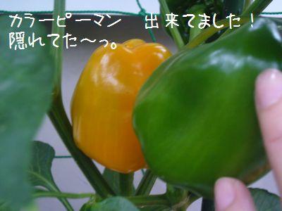 P1030767.jpg