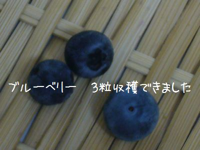 P1030798.jpg