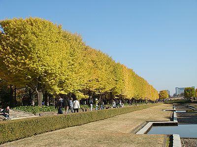 昭和記念公園 いちょう