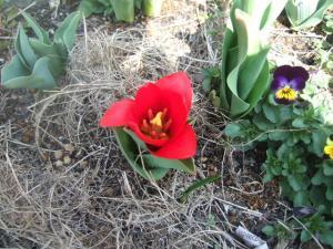 2008-03-16_00.jpg