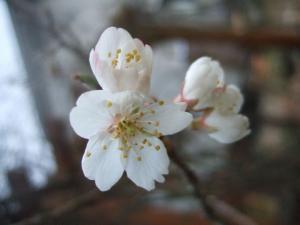 2008-03-18_07.jpg
