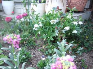 2008-03-21_07.jpg