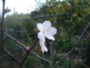 2008-04-01_00_20080401203408.jpg