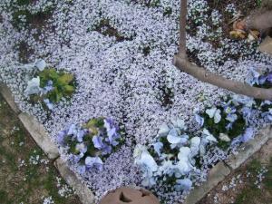 2008-04-01_29.jpg
