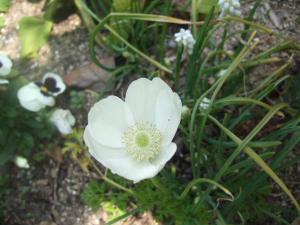 2008-04-03_22.jpg