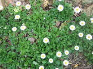 2008-04-03_26_20080404183121.jpg