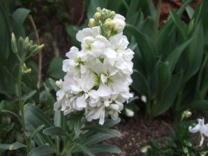 2008-04-04_00.jpg