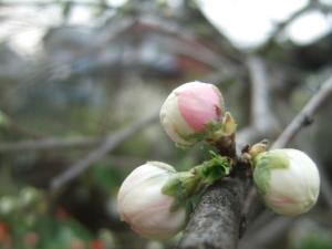 2008-04-05_08.jpg