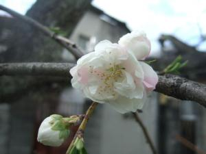 2008-04-08_15.jpg