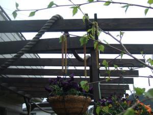2008-04-10_14.jpg