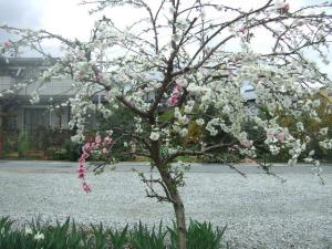 2008-04-11_05.jpg