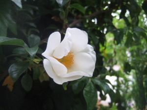 2008-05-01_10.jpg