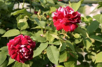 2008-05-21_12.jpg