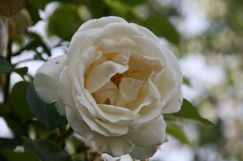 2008-05-21_16.jpg
