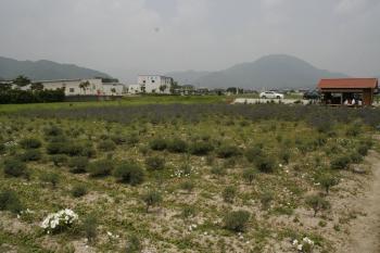 2008-07-04_08.jpg