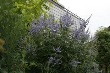 2008-07-07_00.jpg
