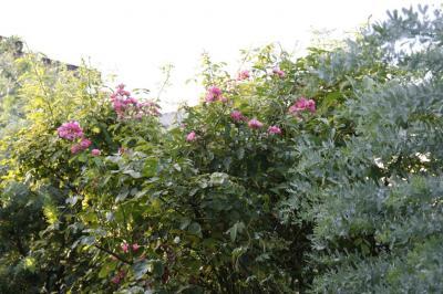 2008-08-10_25.jpg