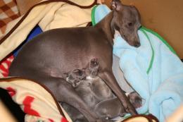 クーピーと赤ちゃん