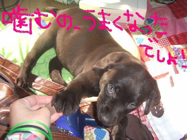 2008_0306こあん0073