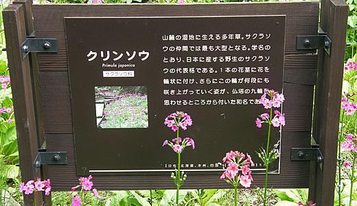 syokubutu-1
