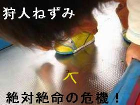 てんとう虫の悲劇