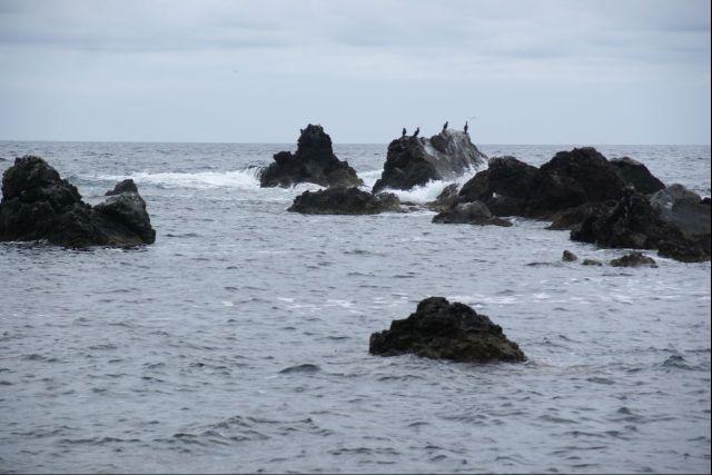 岩波カモメ0000