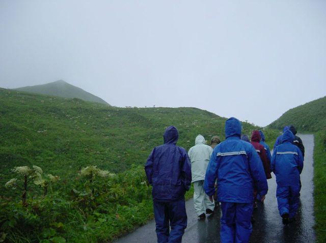 風雨の礼文林道