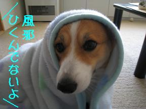 風邪ひかないよう
