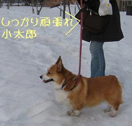 がんばれぃ