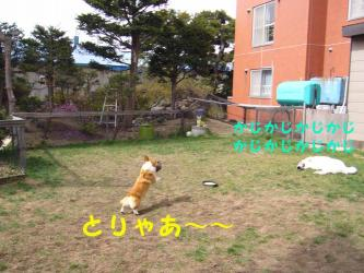 2008 5 3 jaran1