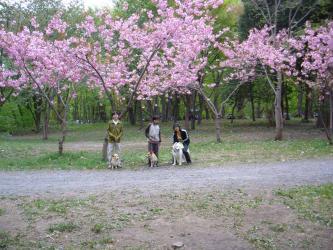 2008 5 5 jakoran3