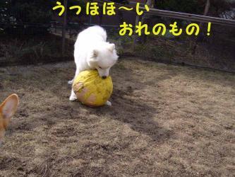 2008412koran5.jpg