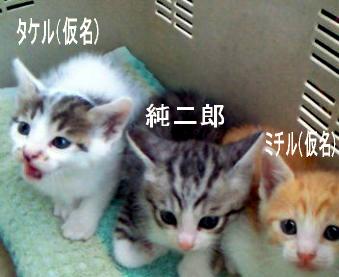コピー ~ blog_3nyan1