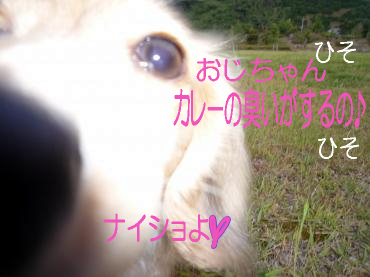 キャン鯉6