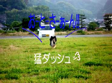 キャン鯉5
