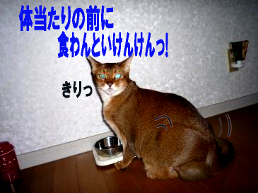 ポレげんご4