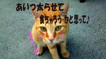 ショ-ン1