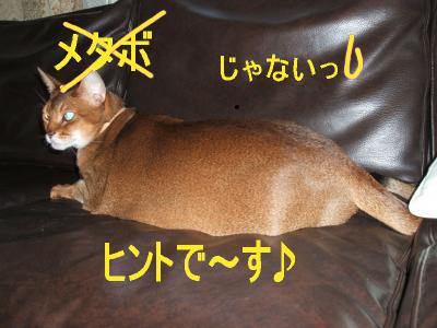 BG3_20080609163927.jpg