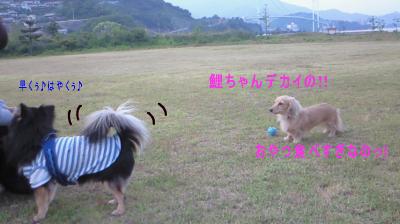 K4_20080627104220.jpg