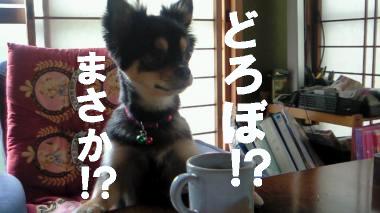 blog-koi1.jpg