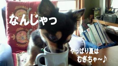 blog-koi2.jpg