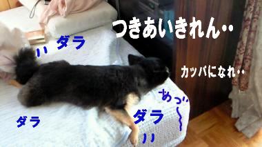 blog-koi3.jpg