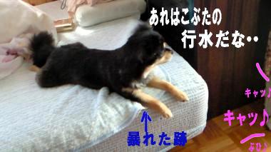 blog-koi4.jpg