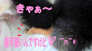 blog-koi5.jpg