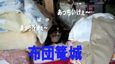 blog-koi6.jpg