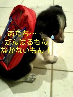 img20080427_1_t.jpg