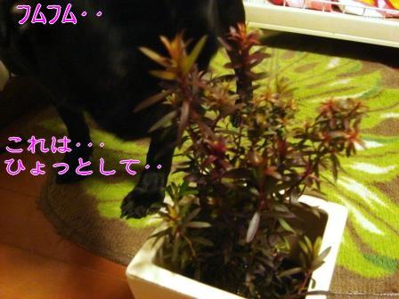 DSC029532.jpg