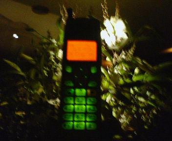 0217phone.jpg